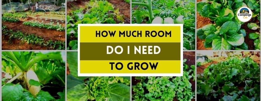 How Much Room Do I Need to Grow